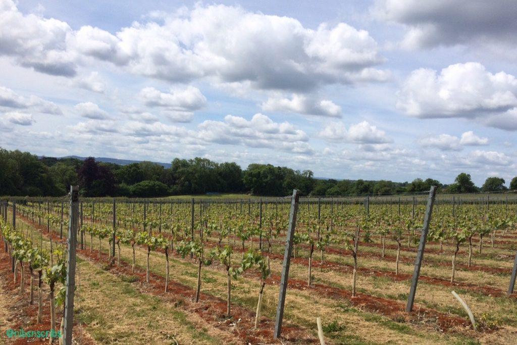 Greyfriars Vineyard